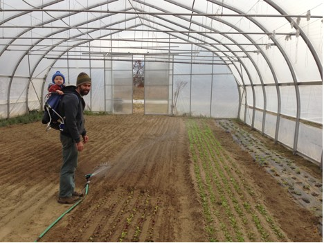 Farmer Ryan Voiland tends to one of Red Fire Farm's winter greenhouses/L. Goodrich Ezor