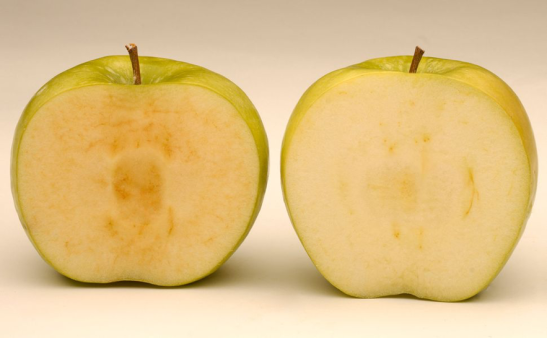 A regular apple, on the left, shows brown spots, while an Arctic® Apple has a clearer appearance. Photo by Okanagan Specialty Fruits