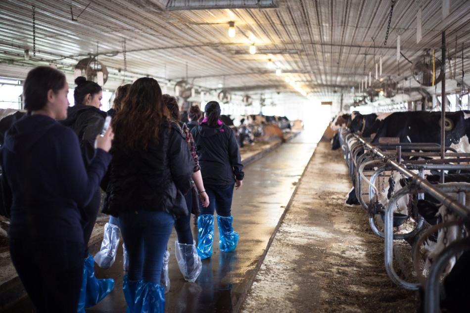Students begin the tour of Fairchild's maternity barn.Photo: Kathleen Nay