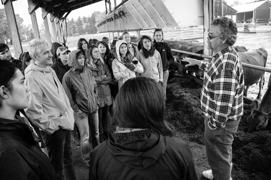 UNH's organic dairy was the first of its kind to be established at a land grant university. Primary areas of research include dairy nutrition and feeds, pasture quality, forage production, compost production, and natural resource management.Photo: Kathleen Nay