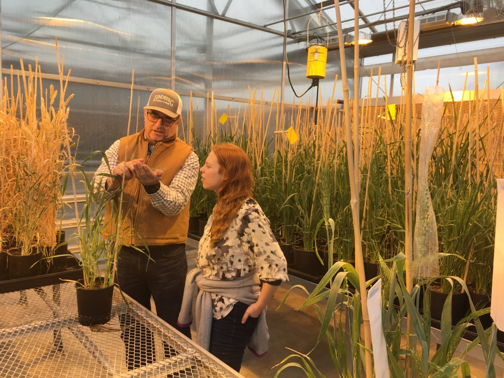 Plant breeding at The Bread Lab with Steve Lyon